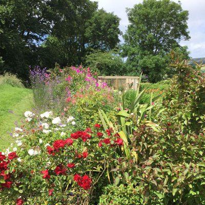 elworth-garden-19