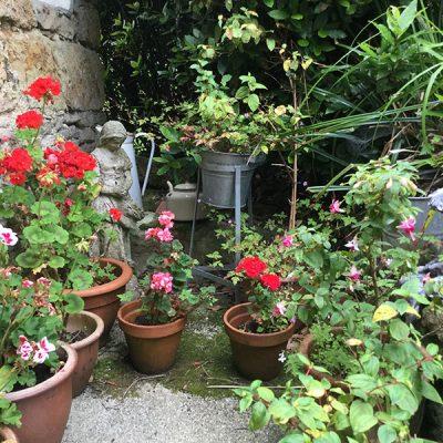 elworth-garden-6