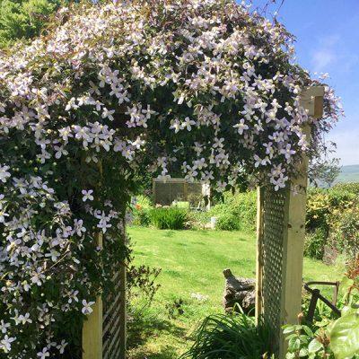 elworth-garden-10
